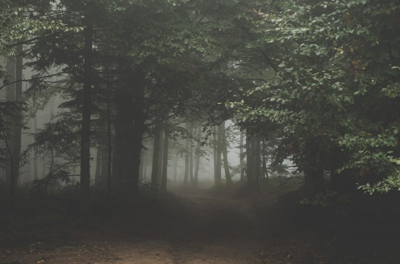 BOOK LIST: 'THE WOODS HAVE NEVER SOUNDED SO GOOD'